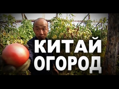 «Китай-огород».«Китай-огород».НТВ.Ru: новости, видео, программы телеканала НТВ