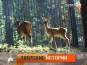 «Спасатели»: «Зверские истории».животные, помощь, спасатели.НТВ.Ru: новости, видео, программы телеканала НТВ