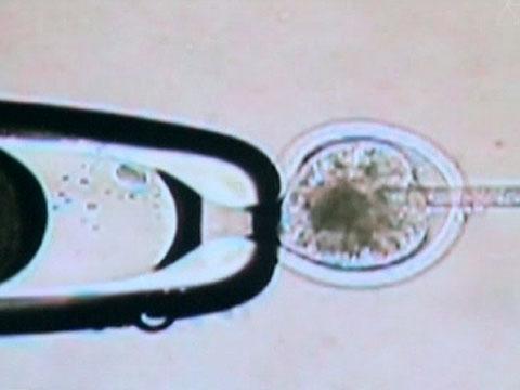 Выпуск от 16декабря 2012года.Как оживить мамонта, что носить вхолода ичем опасны бесконтактные платежи.НТВ.Ru: новости, видео, программы телеканала НТВ