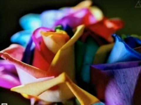 Выпуск от 3марта 2013года.Цветочные технологии, хитрые окна игаджеты будущего.НТВ.Ru: новости, видео, программы телеканала НТВ