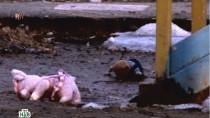 Выпуск от 20апреля 2013года.Насилие над детьми изапретный поезд.НТВ.Ru: новости, видео, программы телеканала НТВ