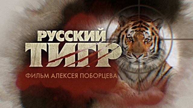 Документальный фильм Алексея Поборцева «Русский тигр»— впонедельник ночью на НТВ.НТВ.Ru: новости, видео, программы телеканала НТВ