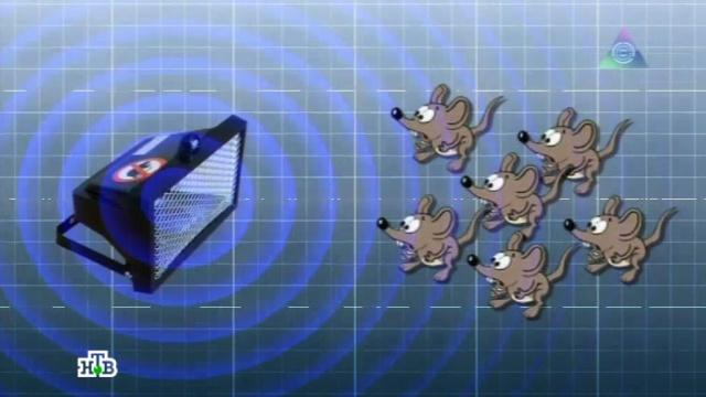 Выпуск от 6октября 2013года.Мышка вмышеловке, как спастись от облысения ибеспроводной пылесос.НТВ.Ru: новости, видео, программы телеканала НТВ