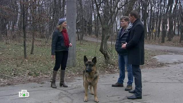 «На грани безумия».«На грани безумия».НТВ.Ru: новости, видео, программы телеканала НТВ
