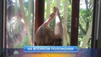 3июня 2014года.3июня 2014года.НТВ.Ru: новости, видео, программы телеканала НТВ