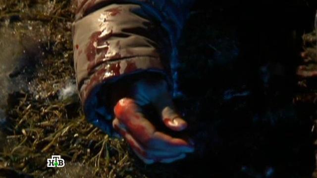 «Месть».Собака загрызла свидетеля, обеспечивавшего алиби насильнику. Кто ее натравил?НТВ.Ru: новости, видео, программы телеканала НТВ