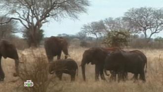 «Дикий мир»: «В Африку гулять»