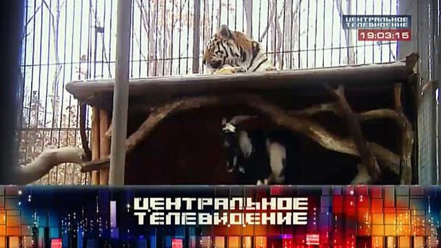 Выпуск от 12 декабря 2015 года.Выпуск от 12 декабря 2015 года.НТВ.Ru: новости, видео, программы телеканала НТВ