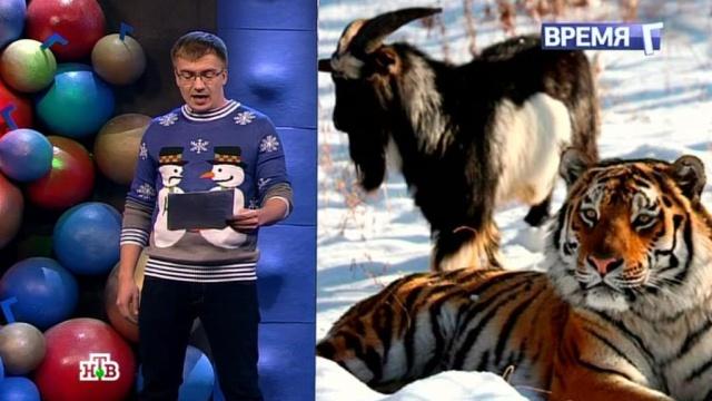 Дружба козла итигра: что хотят нам сказать животные?НТВ.Ru: новости, видео, программы телеканала НТВ