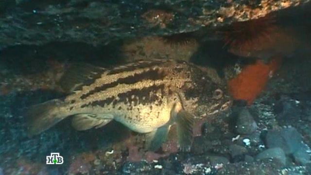 «Подводная Одиссея».«Подводная Одиссея».НТВ.Ru: новости, видео, программы телеканала НТВ