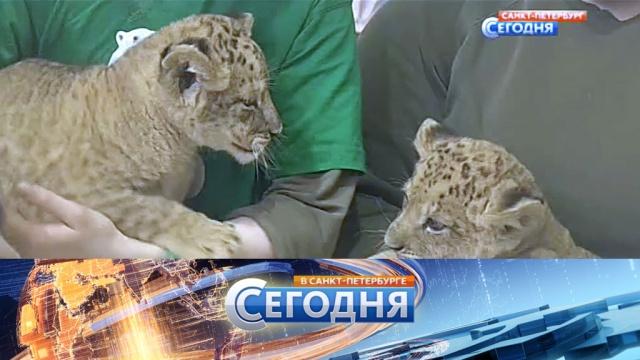 22 апреля 2016 года. 19:20.22 апреля 2016 года. 19:20.НТВ.Ru: новости, видео, программы телеканала НТВ