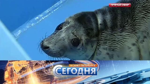 28 апреля 2016 года. 19:20.28 апреля 2016 года. 19:20.НТВ.Ru: новости, видео, программы телеканала НТВ