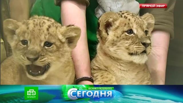 11 мая 2016 года. 16:00.11 мая 2016 года. 16:00.НТВ.Ru: новости, видео, программы телеканала НТВ
