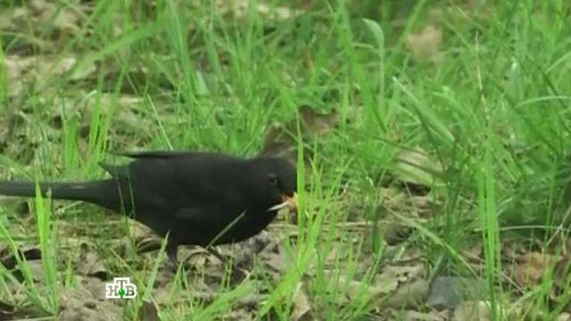 «Животная жизнь».«Животная жизнь».НТВ.Ru: новости, видео, программы телеканала НТВ