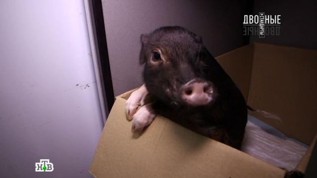 17 сентября 2016 года.Мясоеды против вегетарианцев.НТВ.Ru: новости, видео, программы телеканала НТВ