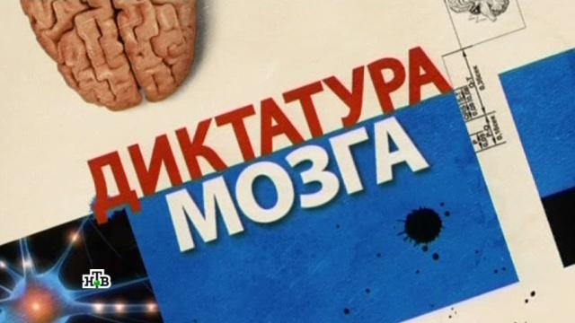 «Диктатура мозга».«Диктатура мозга».НТВ.Ru: новости, видео, программы телеканала НТВ
