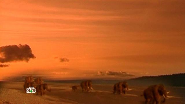 «Якутия. Живые мамонты?».«Якутия. Живые мамонты?».НТВ.Ru: новости, видео, программы телеканала НТВ