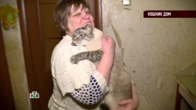 Выпуск от 10 марта 2017 года.«Кошкин дом».НТВ.Ru: новости, видео, программы телеканала НТВ