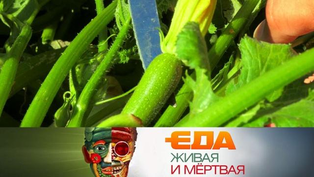 Еда живая и мёртвая.еда, наука и открытия, продукты, технологии.НТВ.Ru: новости, видео, программы телеканала НТВ