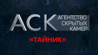 «Тайник».«Тайник».НТВ.Ru: новости, видео, программы телеканала НТВ