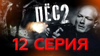 «Тролль».НТВ.Ru: новости, видео, программы телеканала НТВ