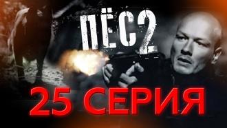 «Жалкий король».НТВ.Ru: новости, видео, программы телеканала НТВ