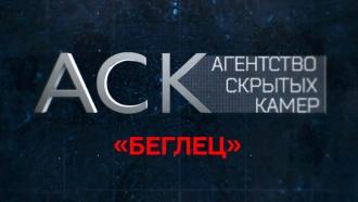 «Агентство скрытых камер»: «Беглец».НТВ.Ru: новости, видео, программы телеканала НТВ