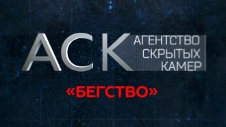 «Бегство».«Бегство».НТВ.Ru: новости, видео, программы телеканала НТВ