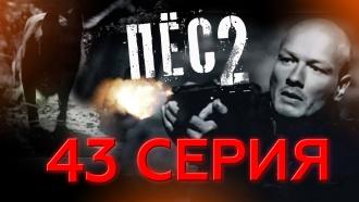 43-я серия.43-я серия.НТВ.Ru: новости, видео, программы телеканала НТВ