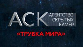«Трубка мира».«Трубка мира».НТВ.Ru: новости, видео, программы телеканала НТВ