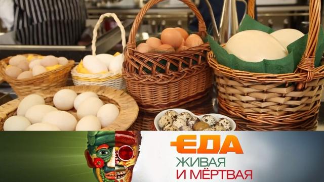 Еда живая имёртвая.еда, наука и открытия, продукты, технологии.НТВ.Ru: новости, видео, программы телеканала НТВ