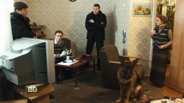 «Суета вокруг дивана».«Суета вокруг дивана».НТВ.Ru: новости, видео, программы телеканала НТВ