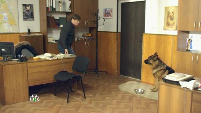 «Консервированный горошек».«Консервированный горошек».НТВ.Ru: новости, видео, программы телеканала НТВ