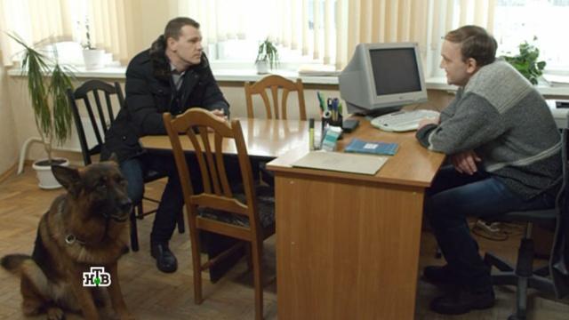 «Запах совести».«Запах совести».НТВ.Ru: новости, видео, программы телеканала НТВ