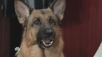 «Жаль, что собаки не носят носки».«Жаль, что собаки не носят носки».НТВ.Ru: новости, видео, программы телеканала НТВ