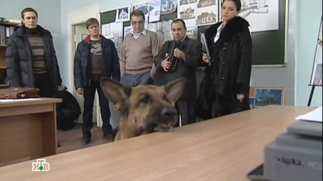 «Макет».«Макет».НТВ.Ru: новости, видео, программы телеканала НТВ