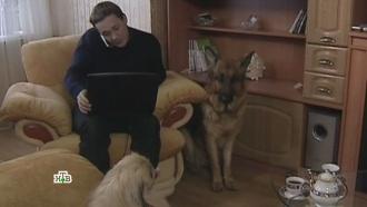 «Дружное семейство».«Дружное семейство».НТВ.Ru: новости, видео, программы телеканала НТВ