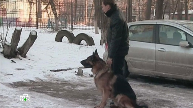 «Вишневый табак».«Вишневый табак».НТВ.Ru: новости, видео, программы телеканала НТВ