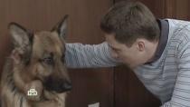 «Тату».«Тату».НТВ.Ru: новости, видео, программы телеканала НТВ