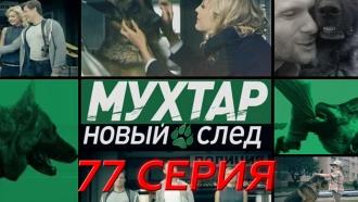 Сериал «Мухтар. Новый след»: «Слепая любовь».НТВ.Ru: новости, видео, программы телеканала НТВ
