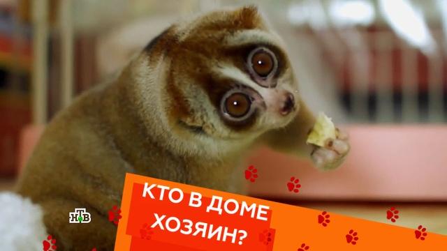 Выпуск пятый.Выпуск пятый.НТВ.Ru: новости, видео, программы телеканала НТВ