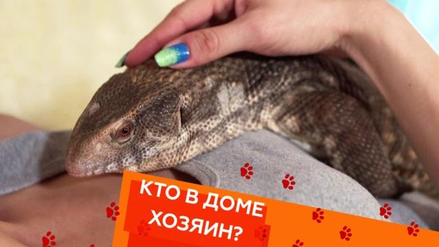 Выпуск седьмой.Выпуск седьмой.НТВ.Ru: новости, видео, программы телеканала НТВ