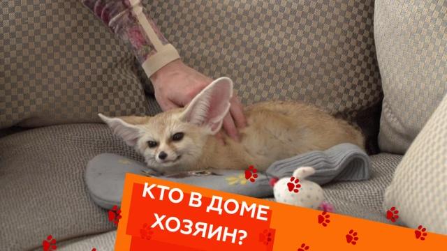 Выпуск девятый.Выпуск девятый.НТВ.Ru: новости, видео, программы телеканала НТВ