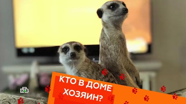 Выпуск десятый.Выпуск десятый.НТВ.Ru: новости, видео, программы телеканала НТВ