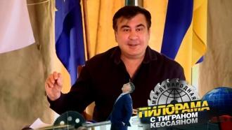Михаил Саакашвили: ареал обитания, особенности линьки илюбимое лакомство