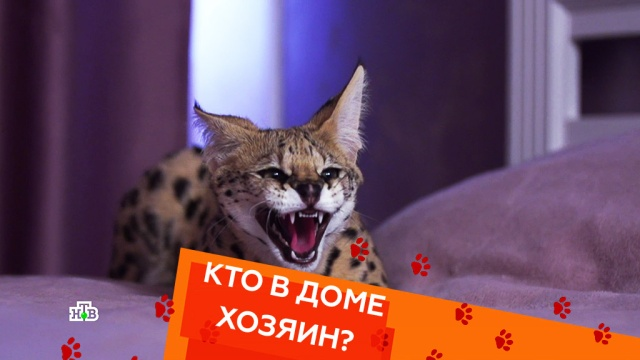 Выпуск четырнадцатый.Выпуск четырнадцатый.НТВ.Ru: новости, видео, программы телеканала НТВ
