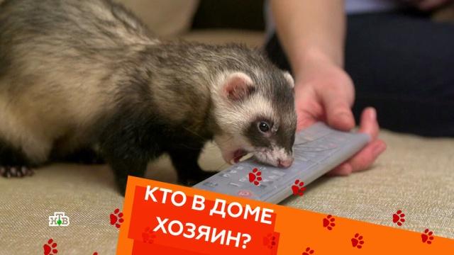 Выпуск пятнадцатый.Выпуск пятнадцатый.НТВ.Ru: новости, видео, программы телеканала НТВ