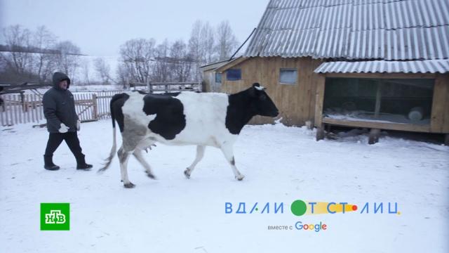 «Вдали от столиц». Фильм четвертый.«Вдали от столиц»: «Цифровая деревня».НТВ.Ru: новости, видео, программы телеканала НТВ