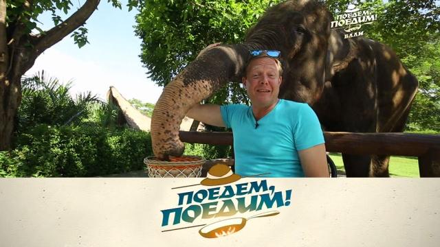 Выпуск от 12мая 2018года.Бали: позитивный зоопарк без решеток, церемония подпиливания зубов, самый дорогой кофе в мире и традиционные сосиски.НТВ.Ru: новости, видео, программы телеканала НТВ