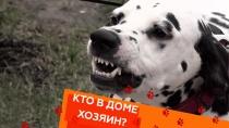 Выпуск восемнадцатый.Выпуск восемнадцатый.НТВ.Ru: новости, видео, программы телеканала НТВ